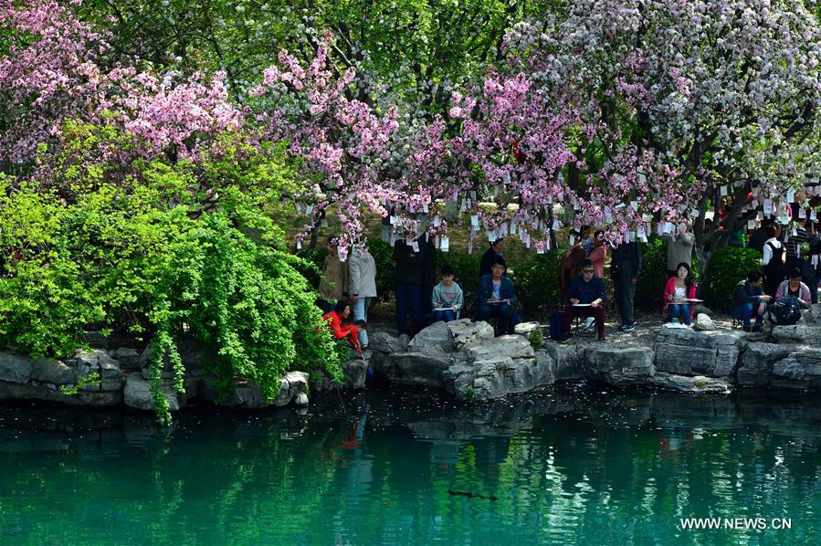 CHINA-JINAN-CRABAPPLE FLOWERS (CN)