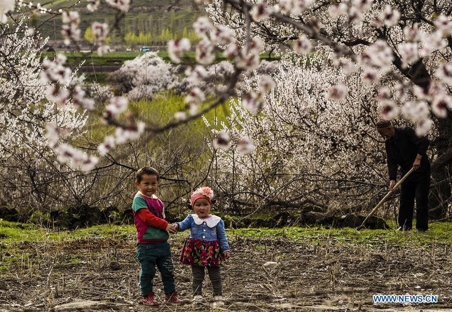 CHINA-XINJIANG-ALMOND FLOWERS(CN)