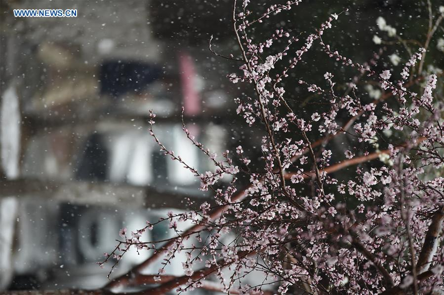 CHINA-CHANGCHUN-PEACH BLOSSOM-SNOW(CN)