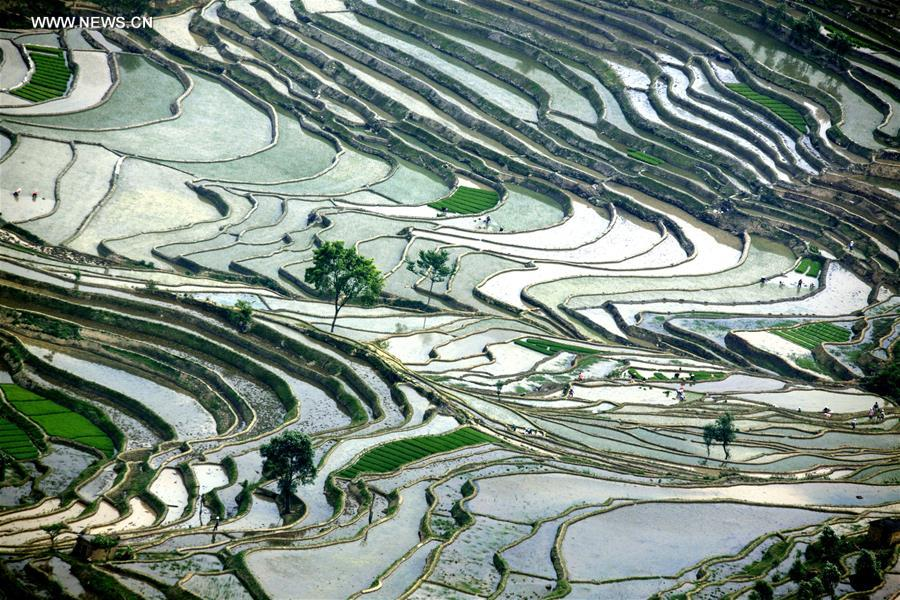 Scenery of terraced fields in Honghe County, SW China's Yunnan