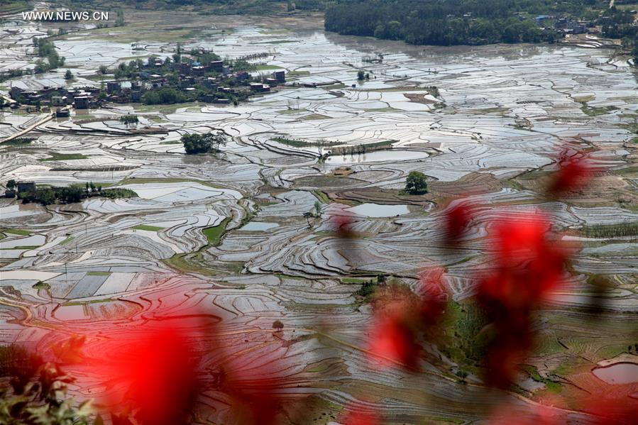 Scenery of rice fields after sustained rainfall in S China's township
