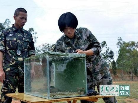 解放军女子特种兵亮相沙场 徒手抓蛇生吃虫(图)