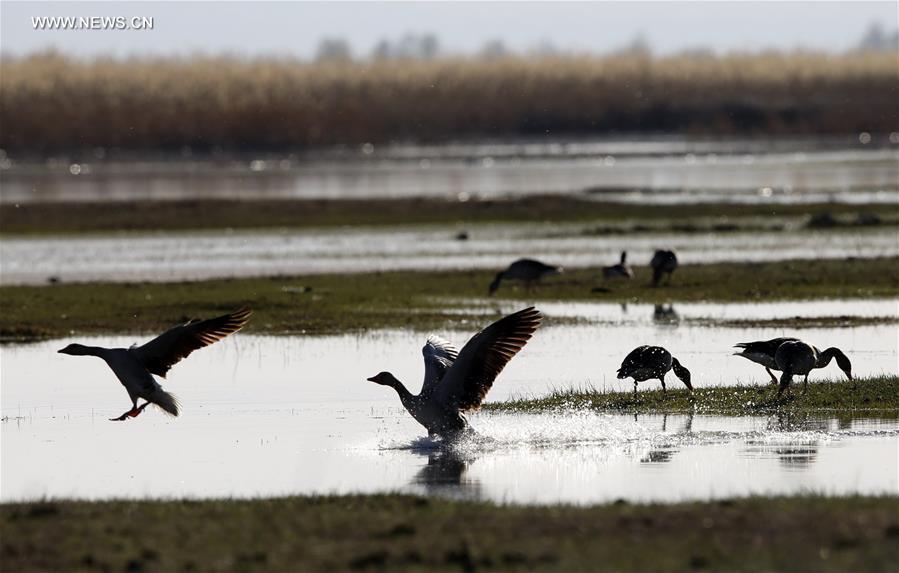 Kekesu Wetland attracts good many migratory birds in China's Xinjiang
