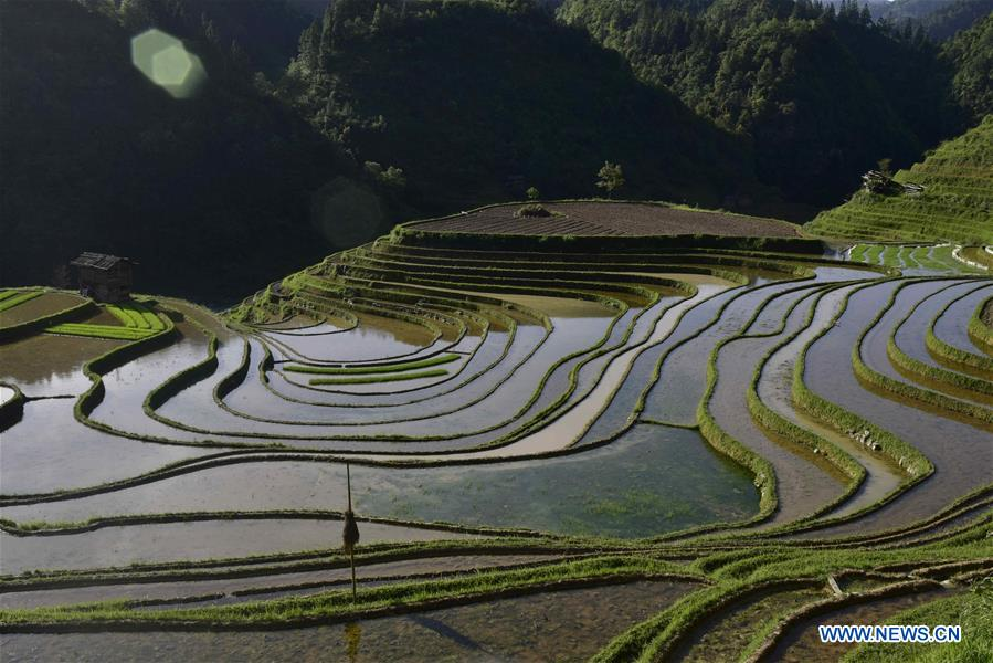 #CHINA-GUIZHOU-CONGJIANG-TERRACES (CN)