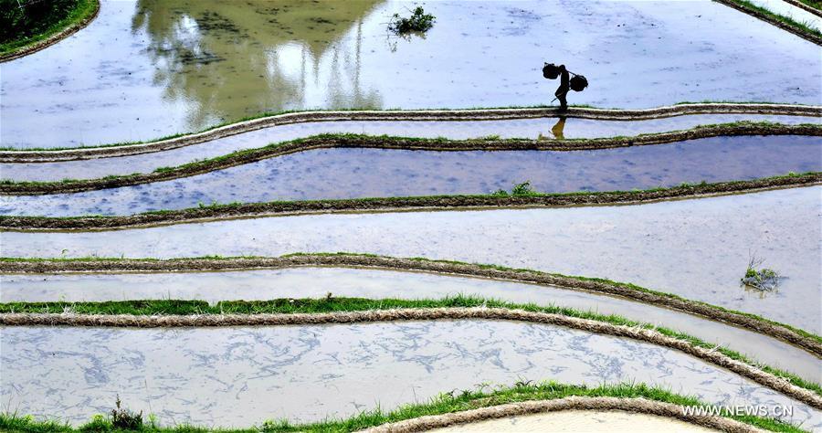 #CHINA-GUIZHOU-CONGJIANG-TERRACE FIELDS (CN)