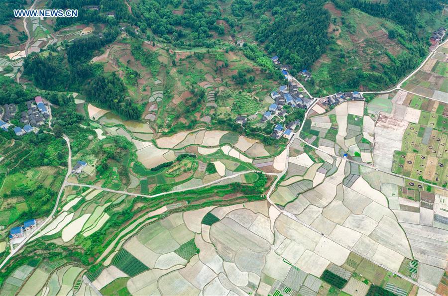 CHINA-GUIZHOU-RICE FIELDS (CN)