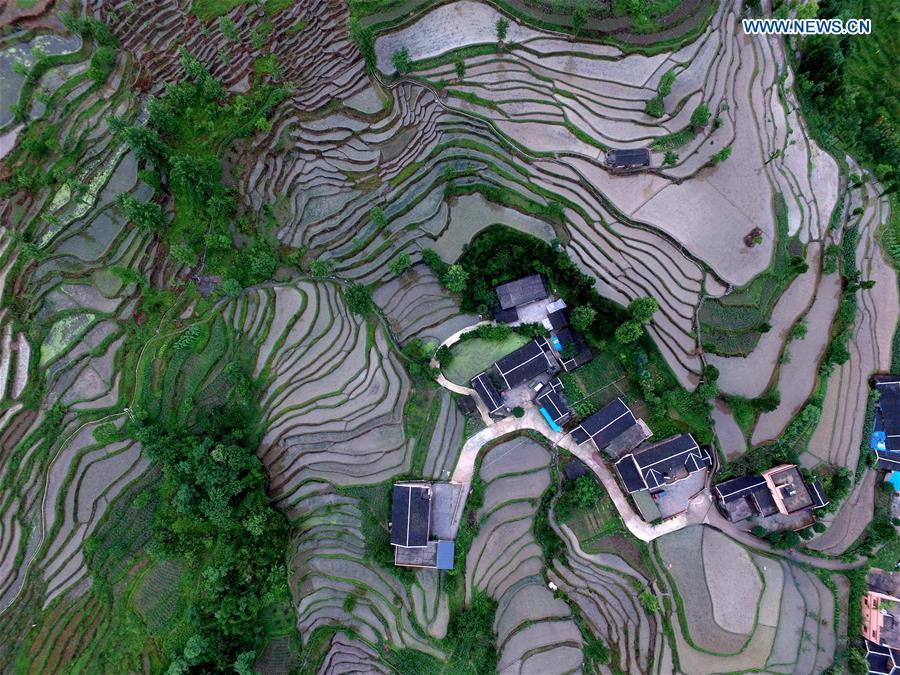 #CHINA-GUIZHOU-YUQING-TERRACED FIELDS (CN)
