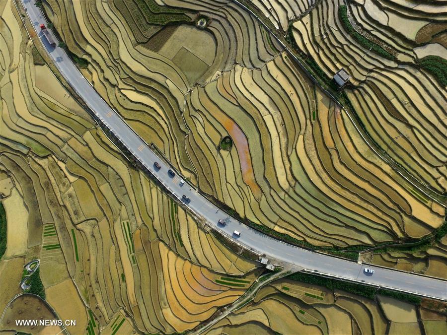 #CHINA-GUANGXI-BAISE-TERRACED FIELDS (CN)
