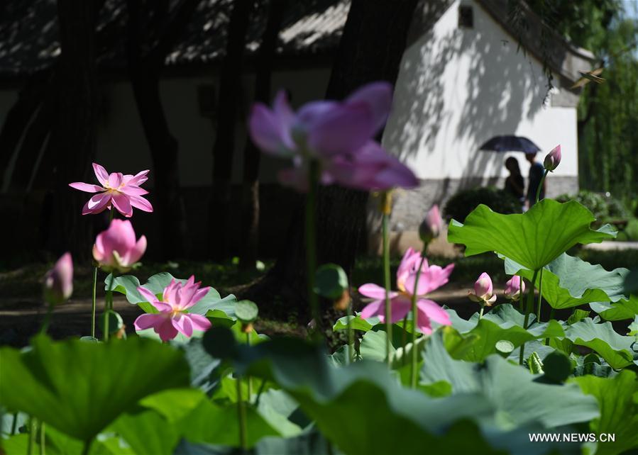 CHINA-BEIJING-LOTUS FLOWER (CN)