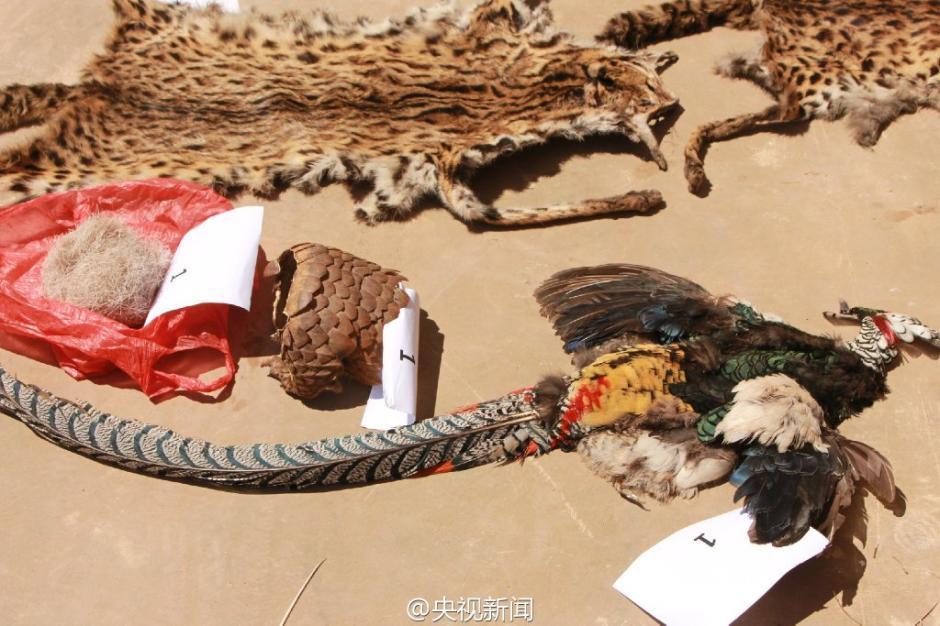 触目惊心!云南警方查获大量野生动物尸体【2】