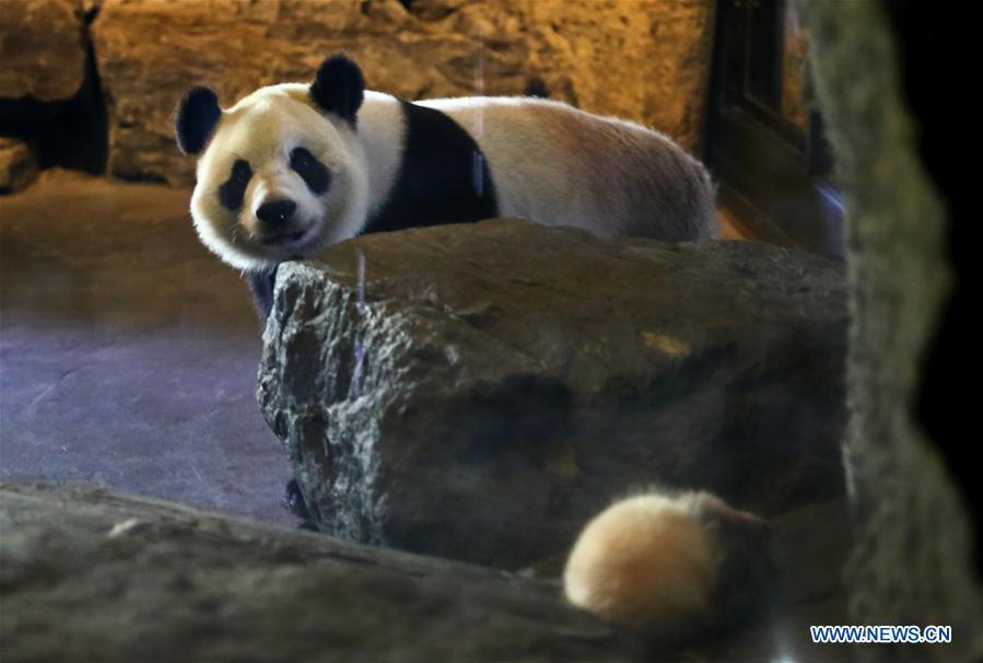 BELGIUM--CHINA PANDA CUB
