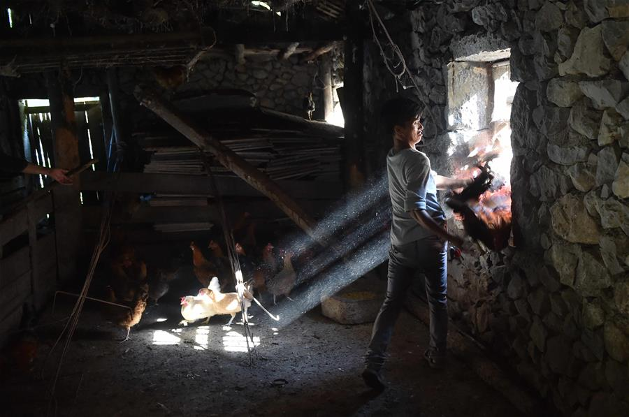CHINA-GUANGXI-DAHUA-CHICKEN INDUSTRY-POVERTY ALLEVIATION(CN)
