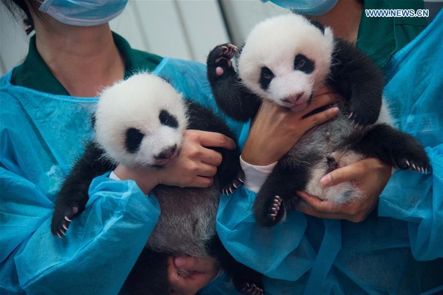 CHINA-MACAO-GIANT PANDA-TWIN CUBS (CN)