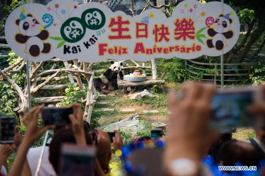 CHINA-MACAO-GIANT PANDA-BIRTHDAY PARTY (CN)