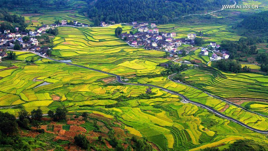 #CHINA-HUNAN-TERRACE-SCENERY (CN)
