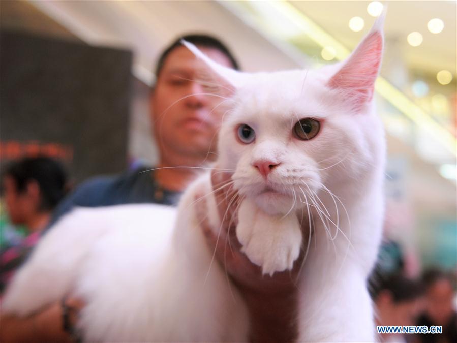 CHINA-CHENGDU-CAT SHOW (CN)