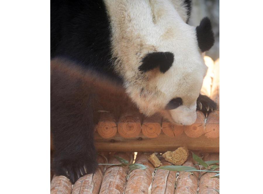 Cute animals share a bite of moon cake festival