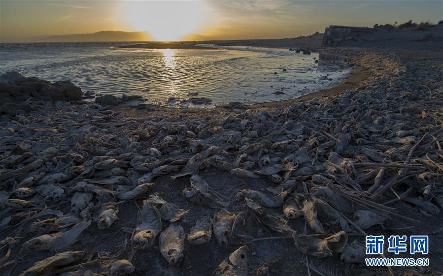 (国际)(1)加州最大湖泊生态环境恶化