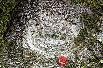 """重庆石头开出比盘子大""""花"""" 讲述5亿年前故事"""