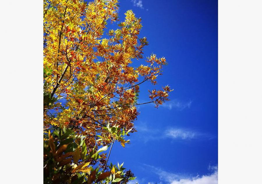 Under the blue sky of Tibet