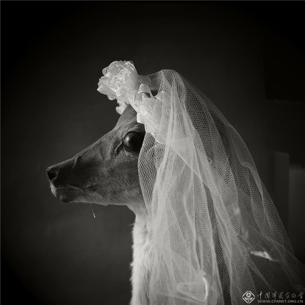 """《中国造像:""""伯奇杯""""》中国创意摄影展(2011-2015)选萃"""