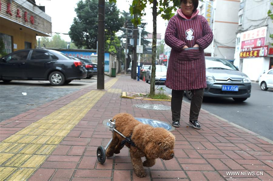CHINA-ANHUI-DISABLED DOG-MOBILITY-KIND PEOPLE (CN)