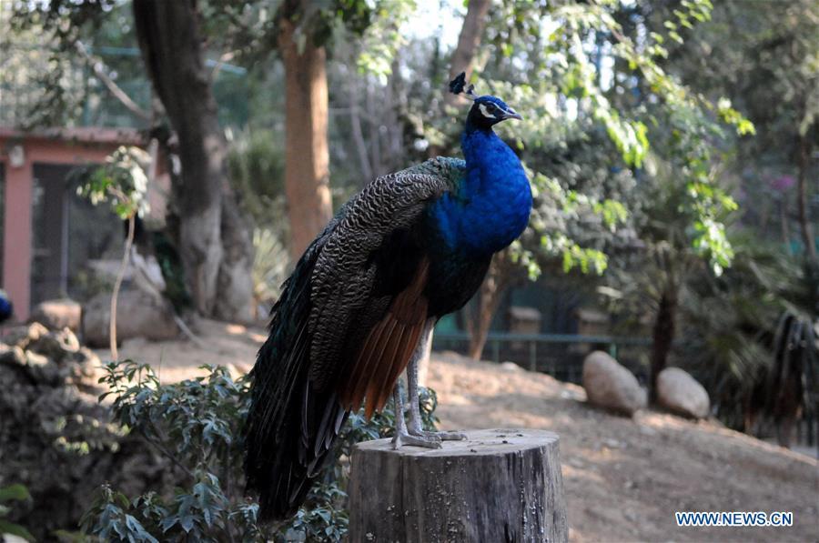 PAKISTAN-ISLAMABAD-BIRD AVIARY