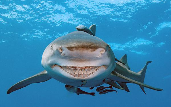 现实版《海底总动员》 美国海岸一鲨鱼面带微笑