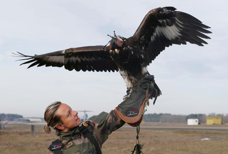 法国空军训练金雕 高空捕获无人机