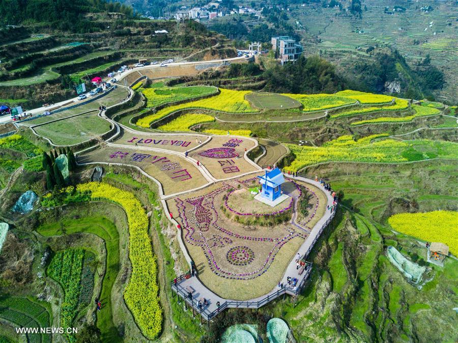 CHINA-ZHEJIANG-COLE FLOWERS-SCENERY (CN)