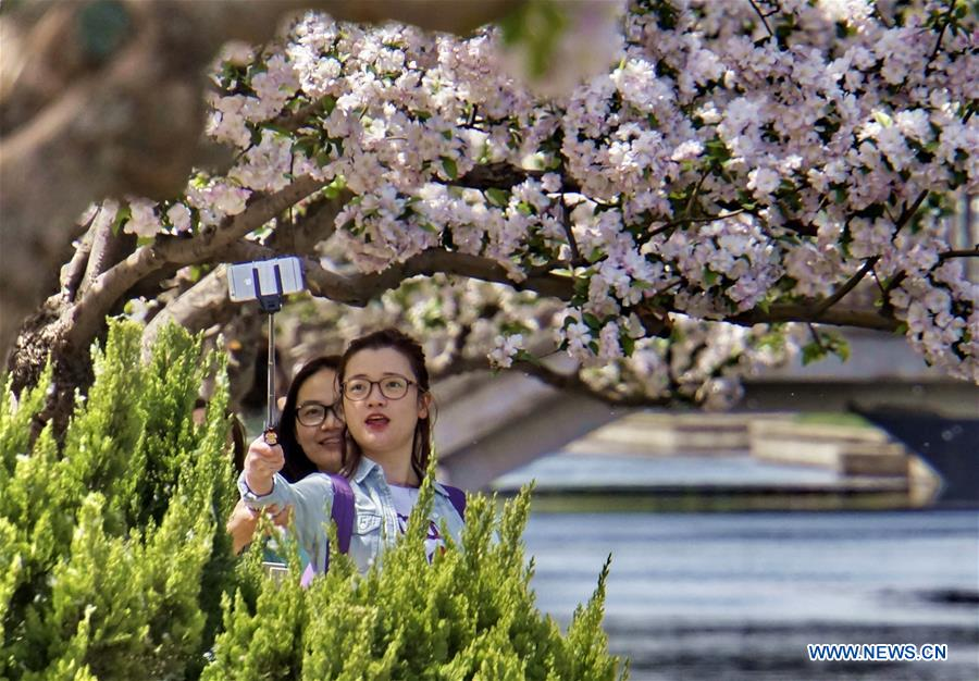 In pics: crabapple blooming view in Beijing