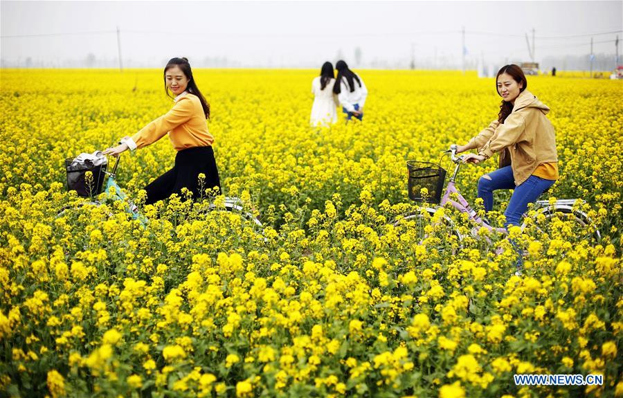CHINA-HEBEI-ANPING-RAPESEED FLOWERS (CN)