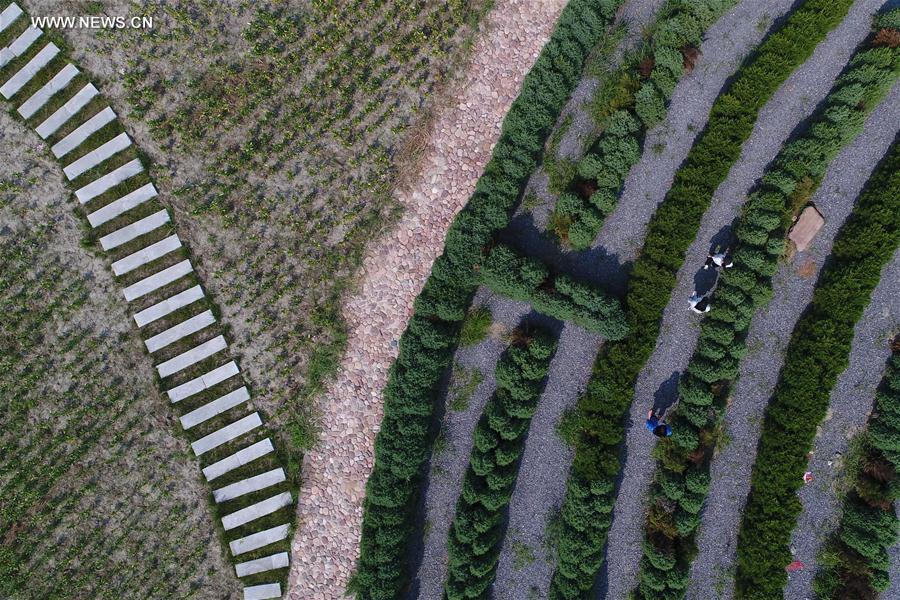 #CHINA-HEBEI-FARM-TOURISM (CN)