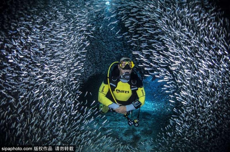 宛如童话 潜水员与银河鱼群共舞