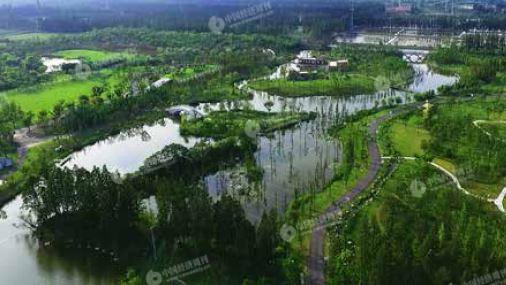 p36-无人机航拍上海长兴岛郊野公园,林地、草地、湿地交错。《中国经济周刊》摄影记者 胡巍 摄影