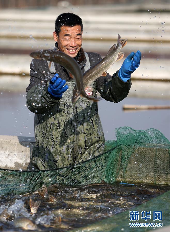 #(视・觉)鱼跃人欢乐