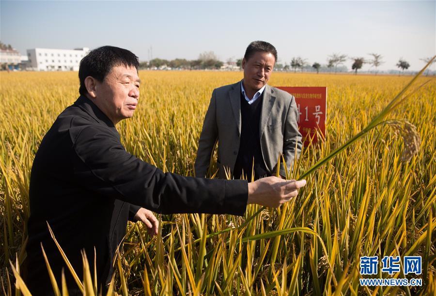 """(新华视点・图文互动)(1)国家科技奖3项授予""""水稻科学家"""",预示百姓饭碗将发生哪些革命?"""