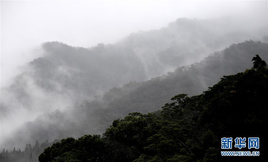 (环境)(1)热带雨林 百鸟家园