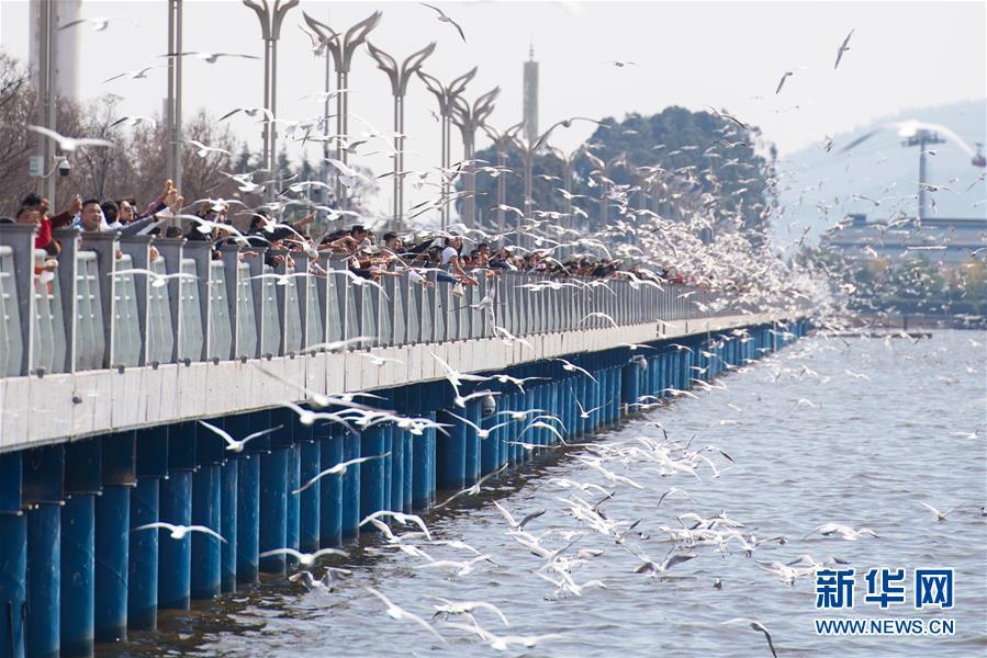 (社會)(1)昆明滇池:人鷗同樂
