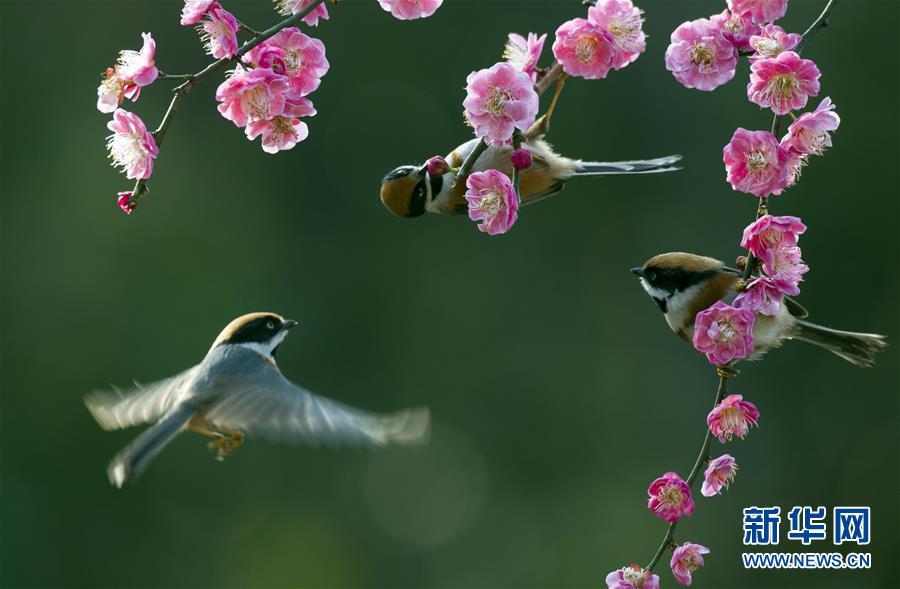 #(环境)(1)春意盎然