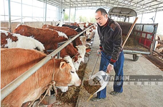 上林县残疾青年韦忠勇:自己脱了贫,还要帮乡亲