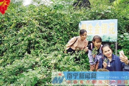 马山古寨乡古朗屯打造原生态瑶族文化品牌促增收