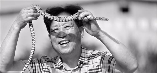 """探秘""""中国第一蛇村"""":几百村民养300万条蛇"""