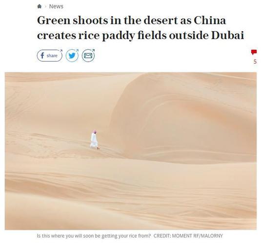 """迪拜沙漠种出""""中国稻""""!外媒点赞中国海水稻突破"""