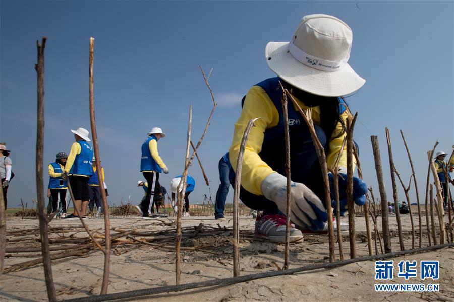 (环境)(1)大学生志愿者在内蒙古治沙