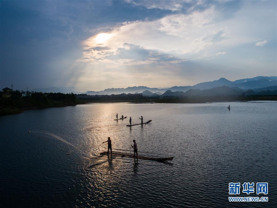 8月1日,淳安县汾口镇红星村的渔民乘著竹排,在千岛湖的支流武强溪