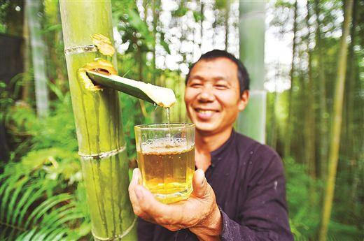 广西龙脊镇大柳村:竹林深处酒飘香 增收致富新渠道