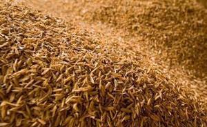 我国率先用稻壳制备高性能铅炭电池,循环寿命提高6倍