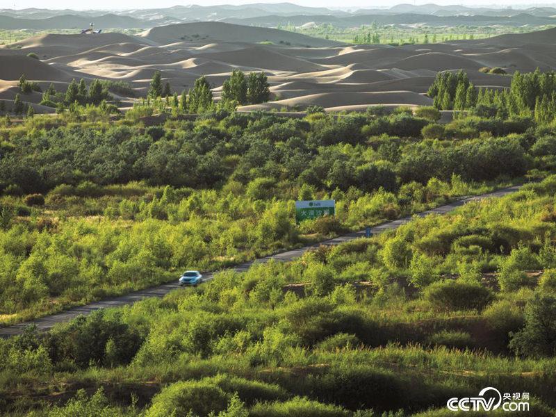 库布其沙漠第一条穿沙公路边已形成绿色长廊