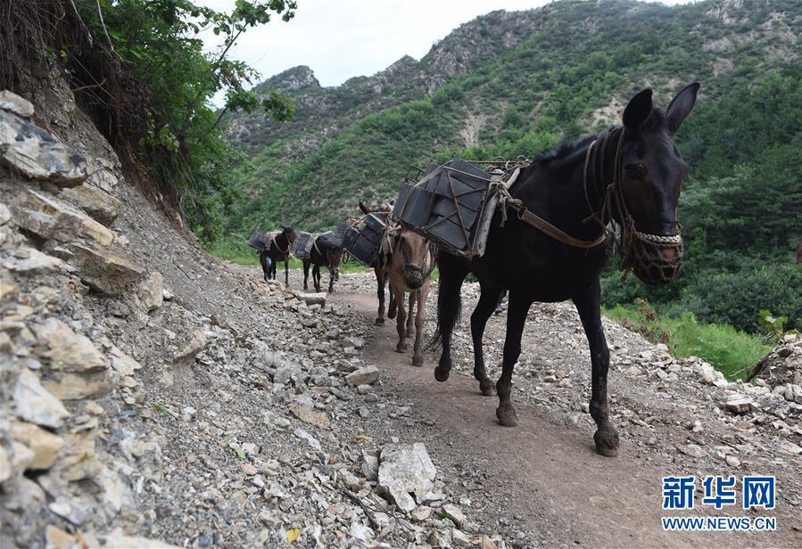 (文化)(1)北京抢险修缮明长城东沟段